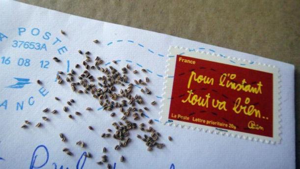 En troquant des graines sur le net, ils défient l'industrie des semences