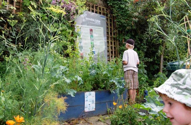 Lancer les incroyables comestibles dans sa ville ou village : la méthode