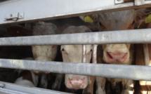 26 ONG lancent un manifeste pour inscrire la condition animale dans le débat politique