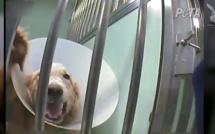 PETA interpelle le Téléthon sur le financement de tests sur les animaux
