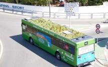 « Mueverte en verde »: les bus madrilènes bientôt équipés de toits végétalisés !