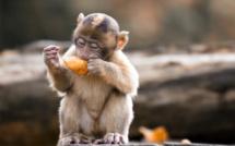 Si nos cerveaux se sont autant développés, c'est grâce aux fruits