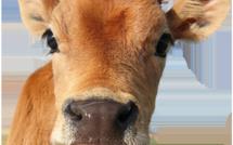 Éliminez les animaux de votre assiette avec ces cinq astuces simples